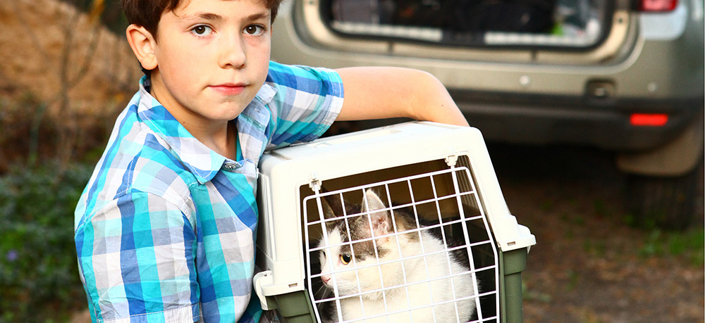 cat-carrier-harness-travel