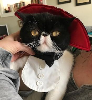 cat-costume-bee