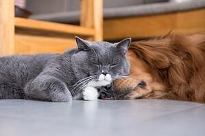 cat-dog-sleeping