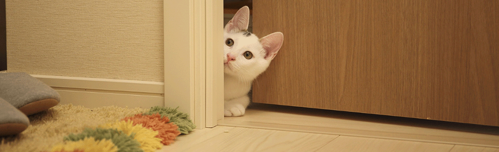 cat-feeding-litterbox