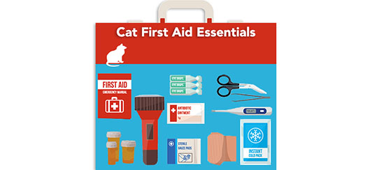 cat-first-aid