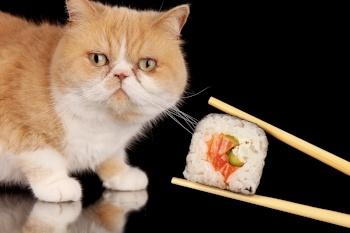 cat-food-sushi.jpg