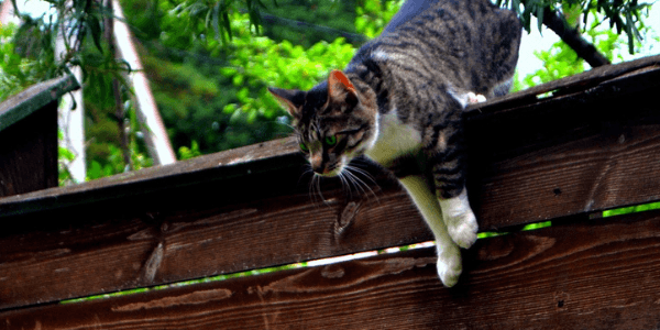 cat-jumping-fence