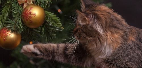 cat-keep-out-of-christmas-tree