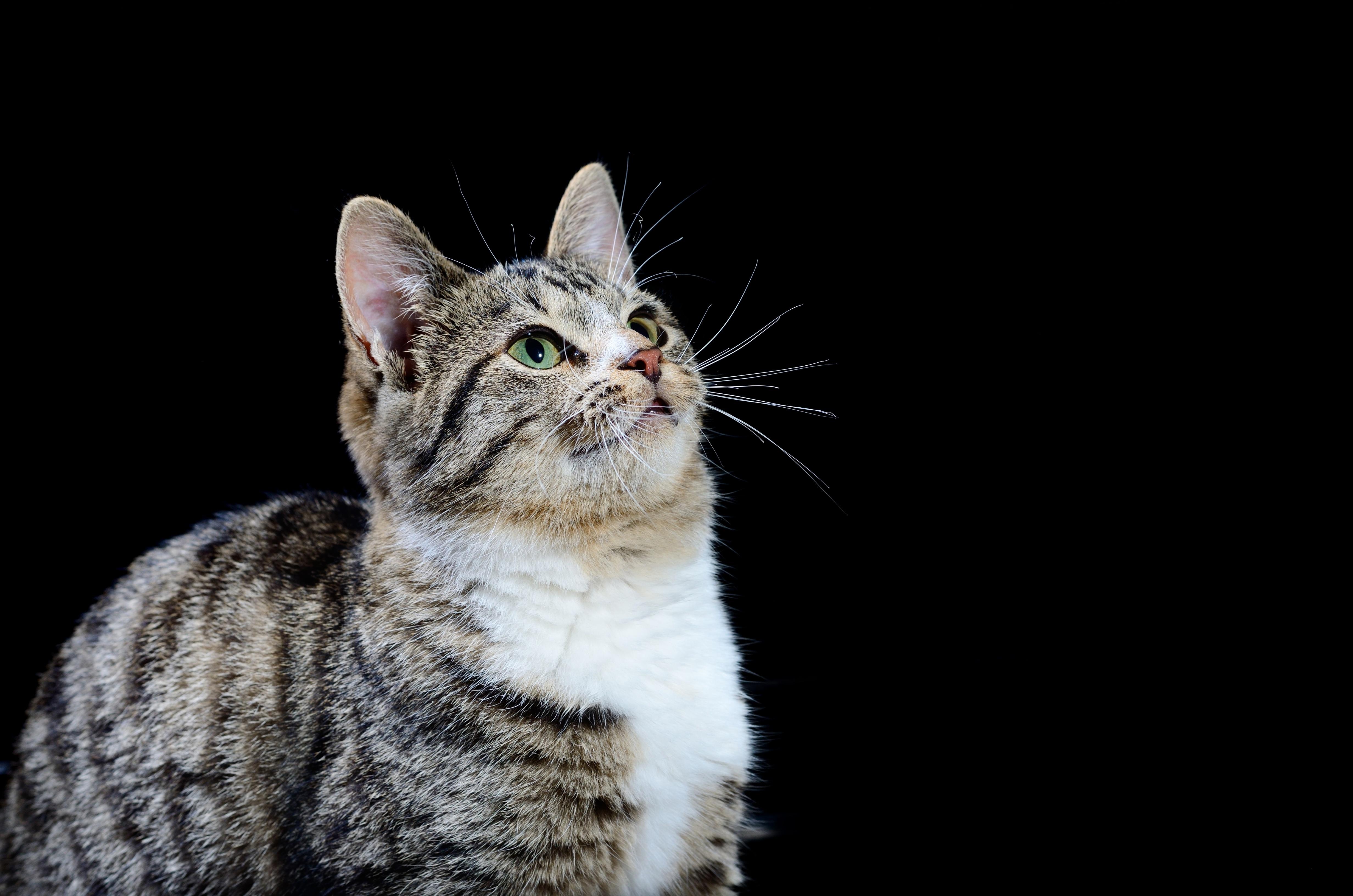 cat-kitten-health-safety-tips-book-mobile.jpg