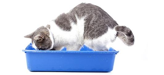 Cat Digging in Litter Box