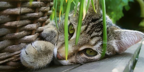 cat-plant-basket