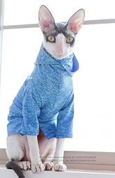 cat-sunscreen-clothing.jpg