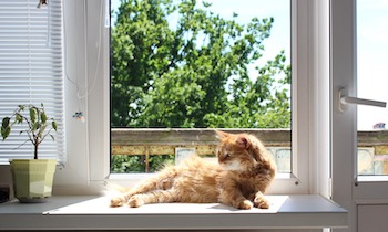 cat-window-sun.jpg