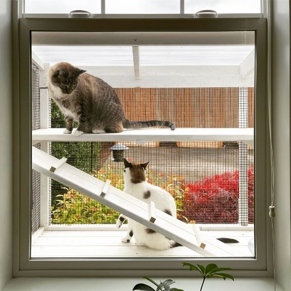 catio in the window for two cats