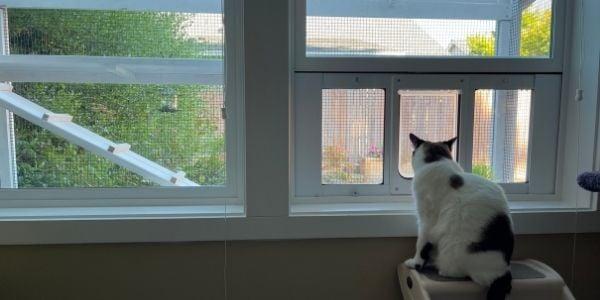 catio with cat door access through the window