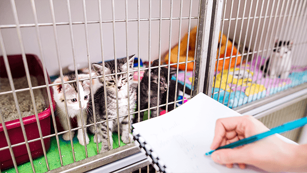 cats-in-shelter-kennel-600