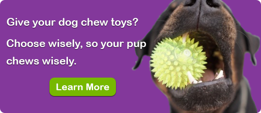 choose your dog's chew toys wisely