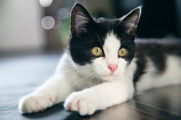 choosing best litter box for cat