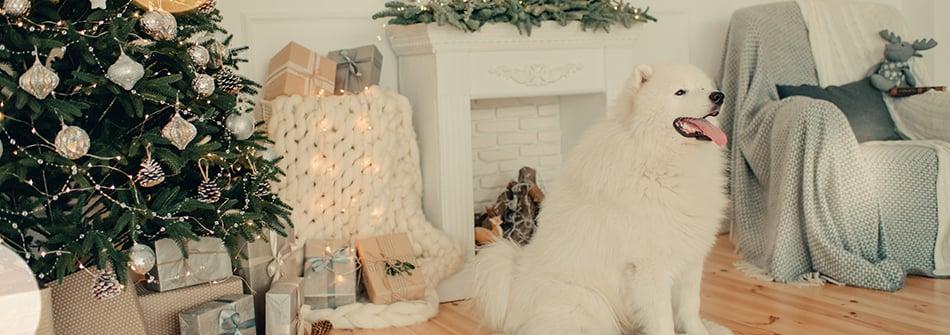 christmas-dog-tree-presents