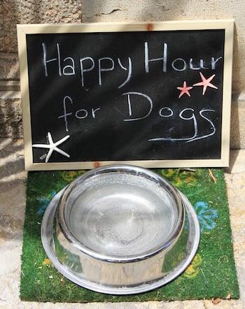communal-dog-water-bowl
