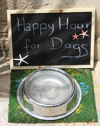 communal-dog-water-bowl