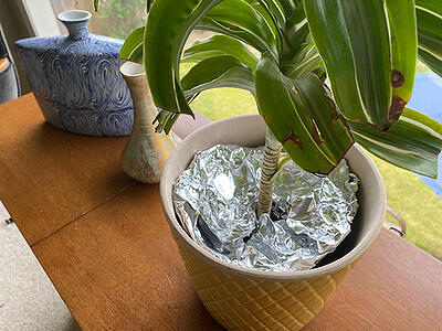 cover plant soil with tin foil