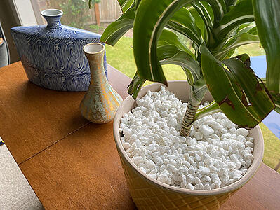 cover plants with packing peanuts