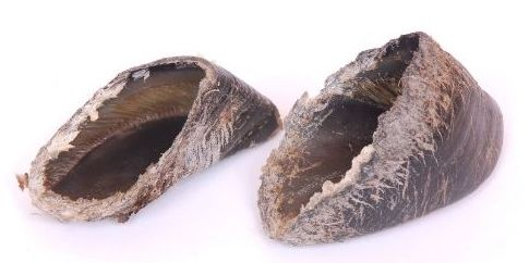 cow hooves and dangers for dogs