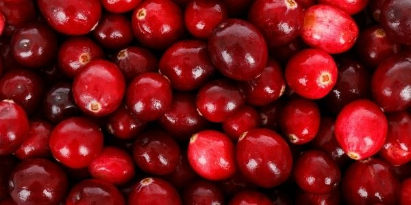 cranberries and pet urinary health