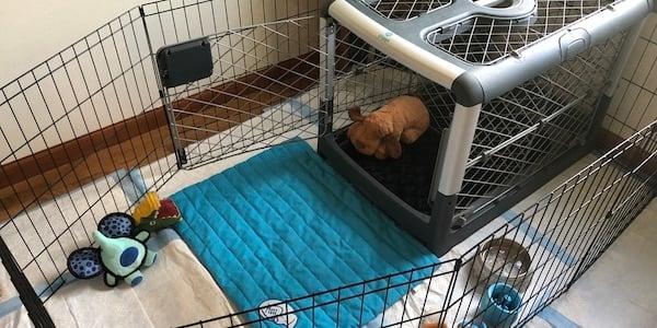 puppy crate setup