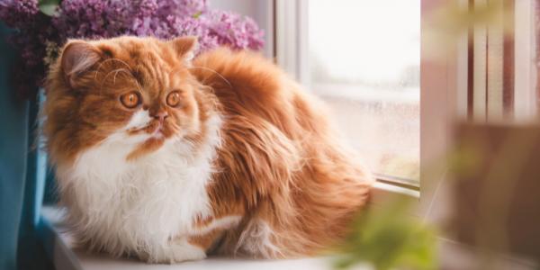 cute cat sitting in window