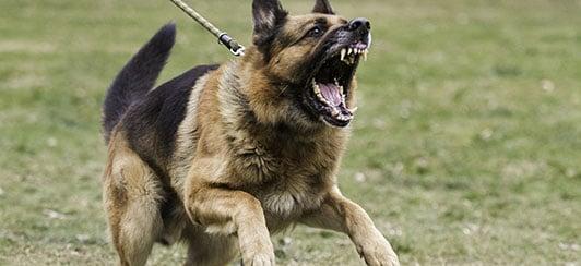 fear barking from leash reactivity