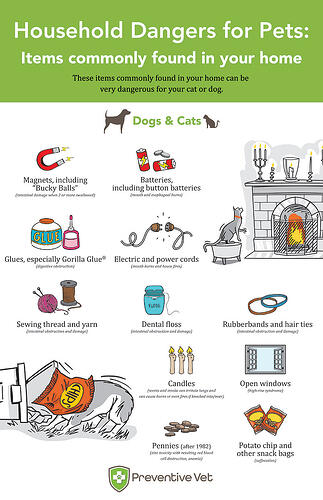Household Hazards Everyday Items