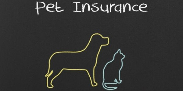 dog and cat pet insurance