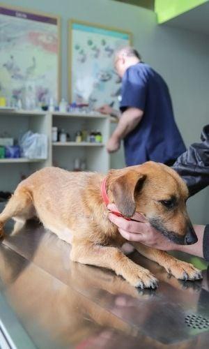 dog at the vet for diarrhea