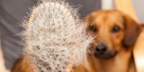 dog brush full of fur