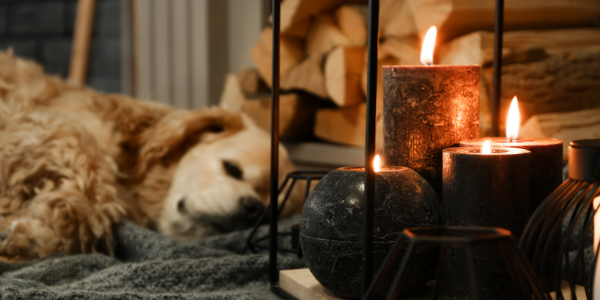 dog by candles dangerous - canva