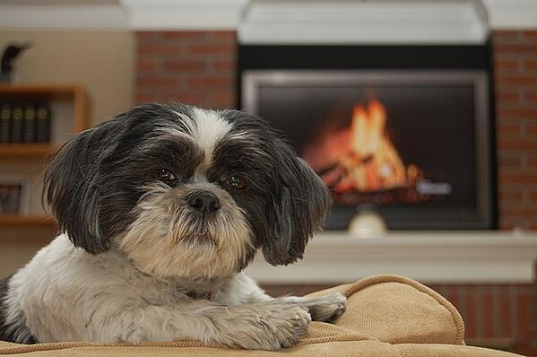 dog by fireplace