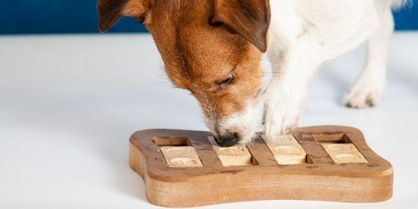 dog enrichment food puzzle