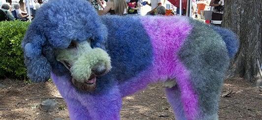 dog hair dye safety