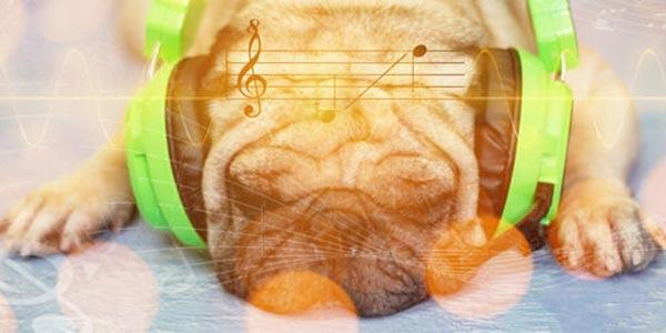 dog listening to calming music