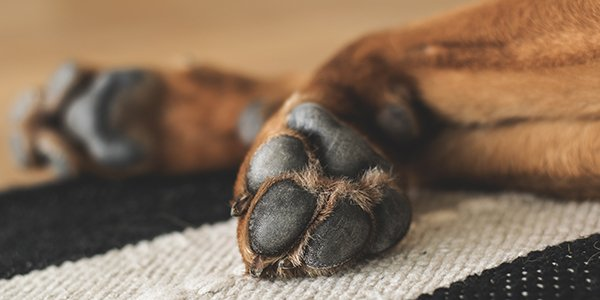 dog paws taking care of paw pads