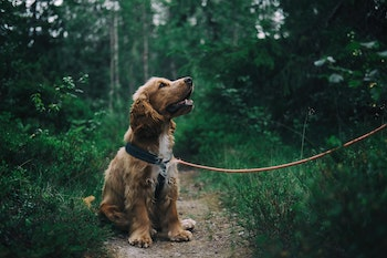 dog sitting politely while on a leash out hiking
