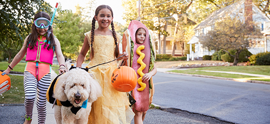 dog training safety commands - halloween