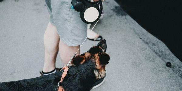 dog walking on retractable leash