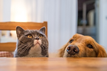 dog-and-cat-at-table