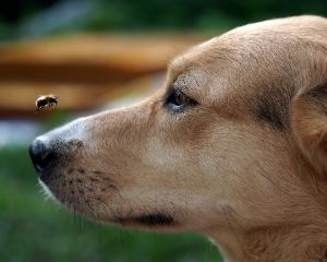 dog-bee-hot-topic-1.jpg