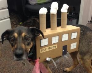 dog-costume-poop-factory
