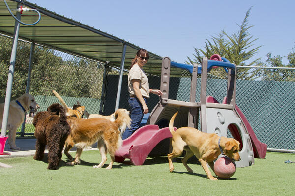 dog-play-daycare-with-staff