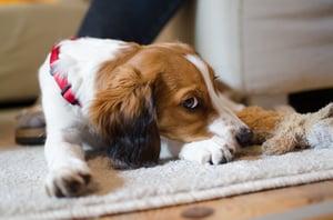 dog-hesitant-socialization