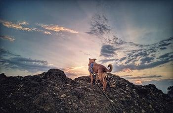 dog-hiking-350