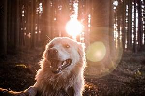 dog-hiking-trail-forest-unsplash-350
