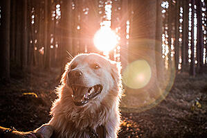 dog-hiking-trail-forest-unsplash-350