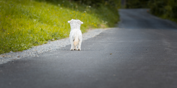 dog-lost-on-road